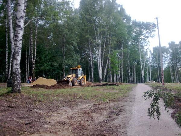 Дмитров, вырубка деревьев